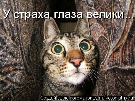 Котоматрица: У страха глаза велики...