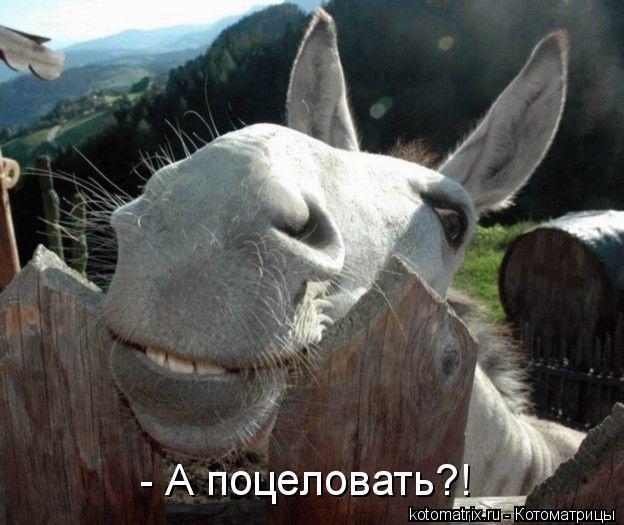 Котоматрица: - А поцеловать?!