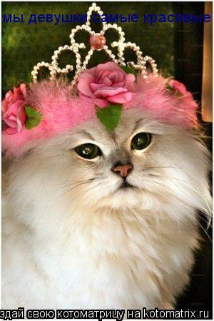Котоматрица: мы девушки самые красивые