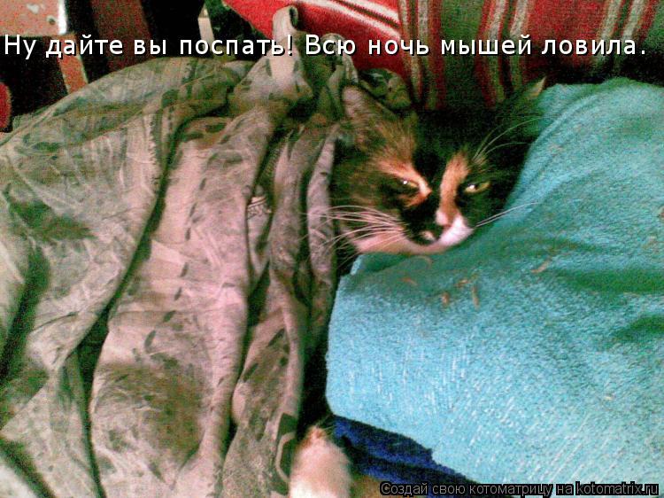 Котоматрица: Ну дайте вы поспать! Всю ночь мышей ловила.