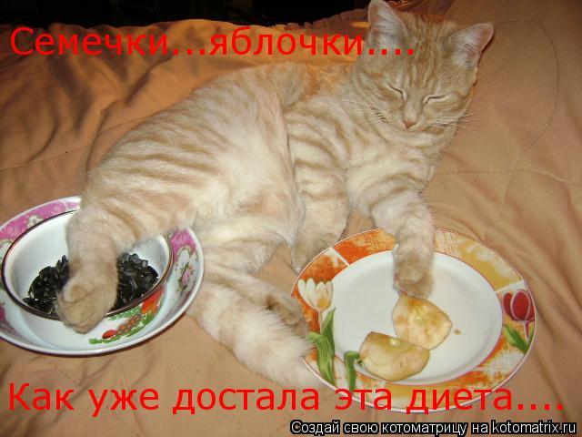 Котоматрица: Семечки...яблочки.... Как уже достала эта диета....