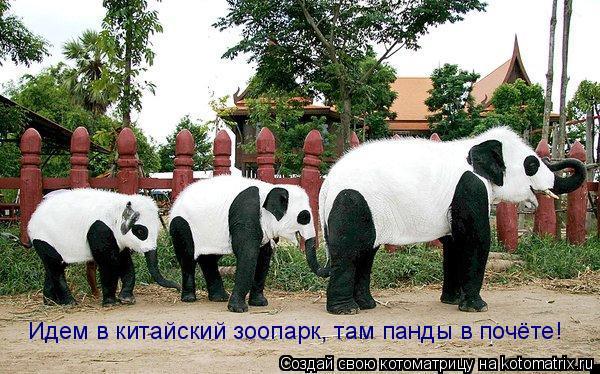 Котоматрица: Идем в китайский зоопарк, там панды в почёте!