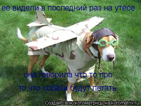 Котоматрица: её видели в последний раз на утёсе она говорила что то про то что собаки будут летать...