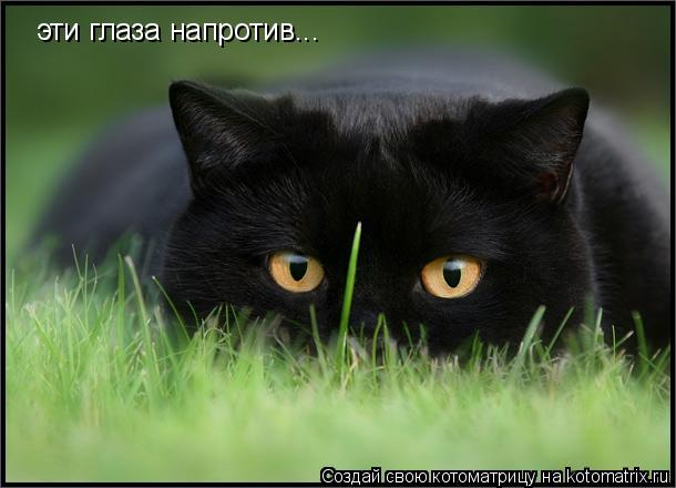 Котоматрица: эти глаза напротив...