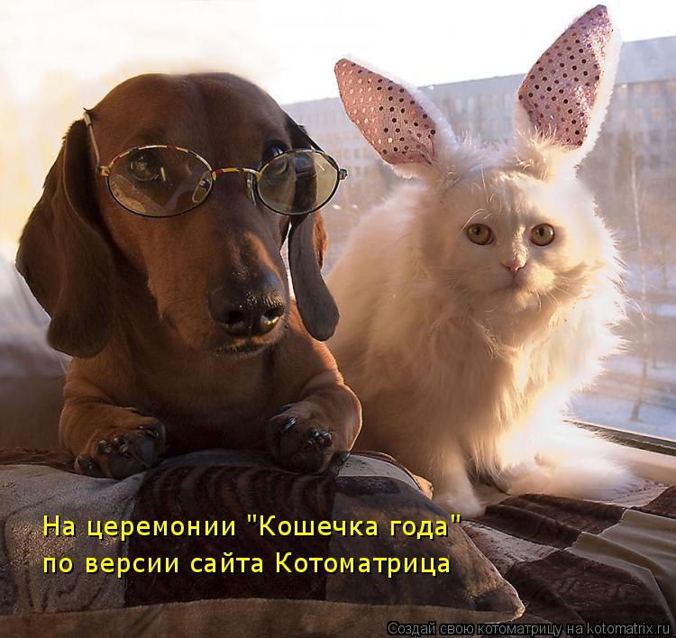 """Котоматрица: На церемонии """"Кошечка года"""" по версии сайта Котоматрица"""