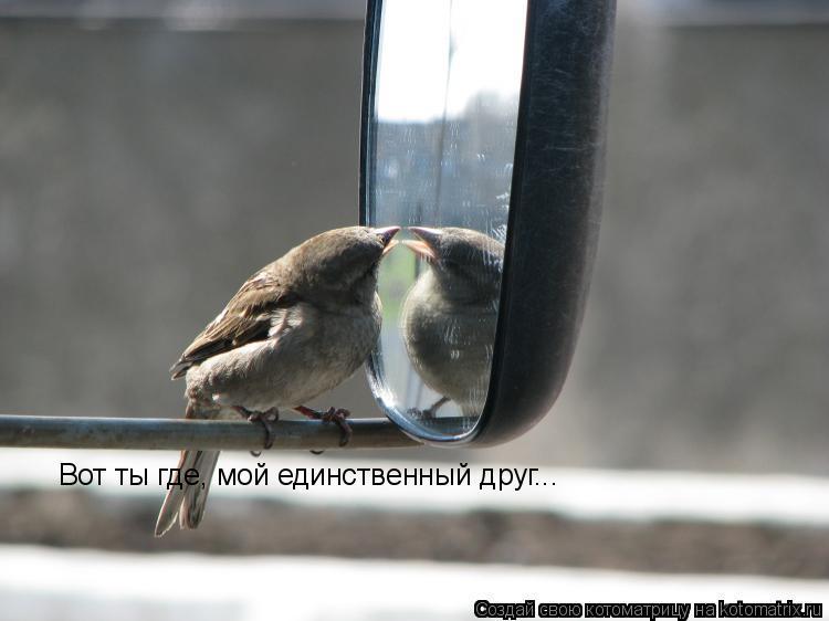 Котоматрица: Вот ты где, мой единственный друг...