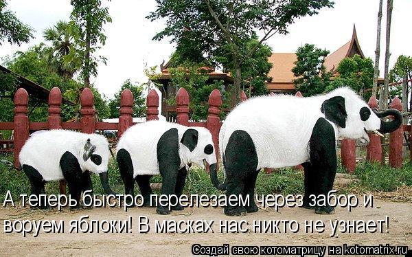 Котоматрица: А теперь быстро перелезаем через забор и воруем яблоки! В масках нас никто не узнает!
