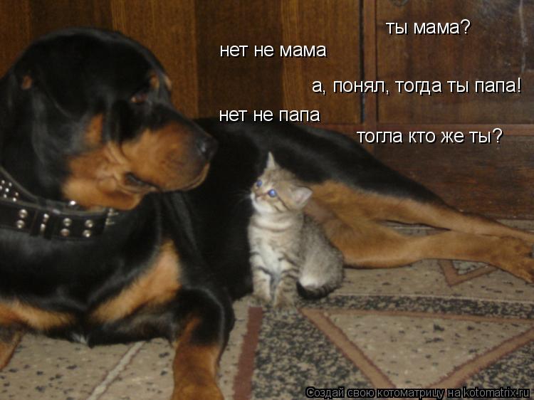Котоматрица: ты мама? нет не мама а, понял, тогда ты папа! нет не папа тогла кто же ты?
