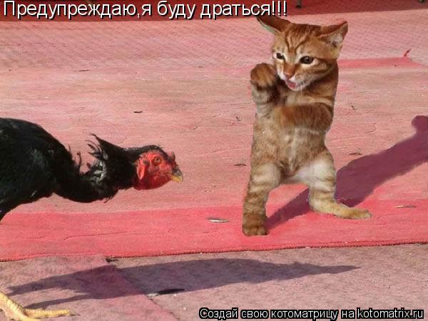 Котоматрица: Предупреждаю,я буду драться!!!