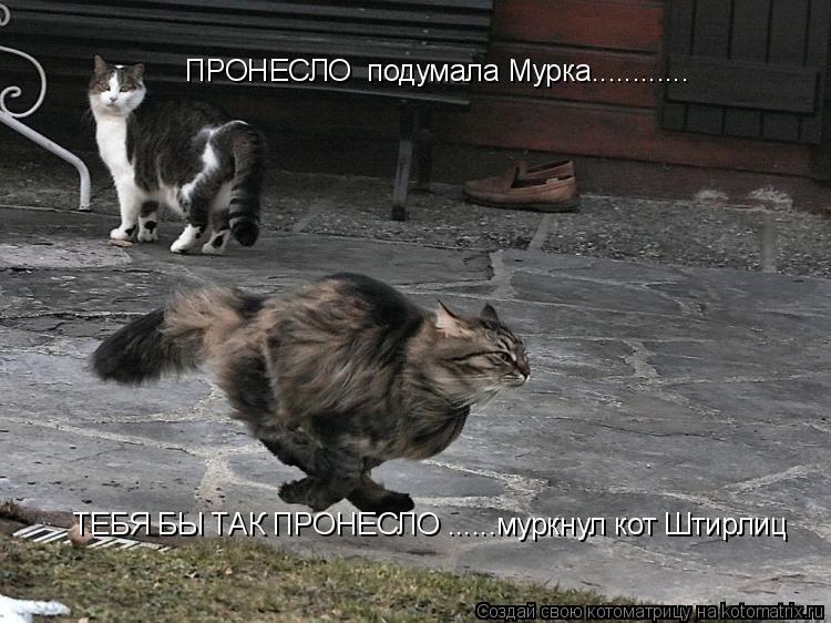 Котоматрица: ПРОНЕСЛО  подумала Мурка............ ТЕБЯ БЫ ТАК ПРОНЕСЛО ......муркнул кот Штирлиц