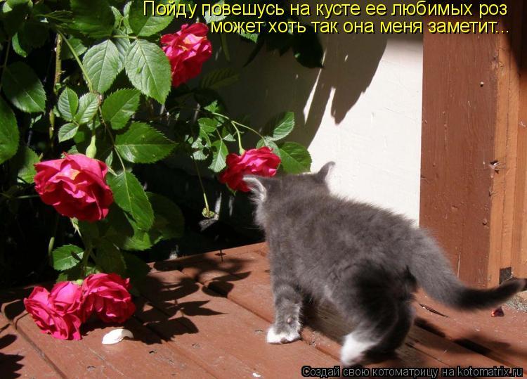 Котоматрица: Пойду повешусь на кусте ее любимых роз может хоть так она меня заметит...