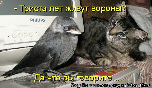 Котоматрица: - Триста лет живут вороны? Да что вы говорите....