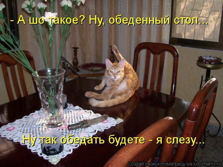 Котоматрица: - А шо такое? Ну, обеденный стол... Ну так обедать будете - я слезу...