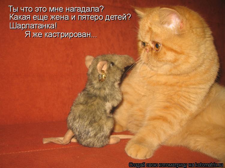 Котоматрица: Ты что это мне нагадала? Какая еще жена и пятеро детей? Шарлатанка!  Я же кастрирован...