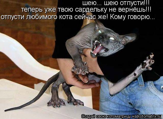 Котоматрица: шею... шею отпусти!!!  теперь уже твою сардельку не вернёшь!!! отпусти любимого кота сейчас же! Кому говорю...
