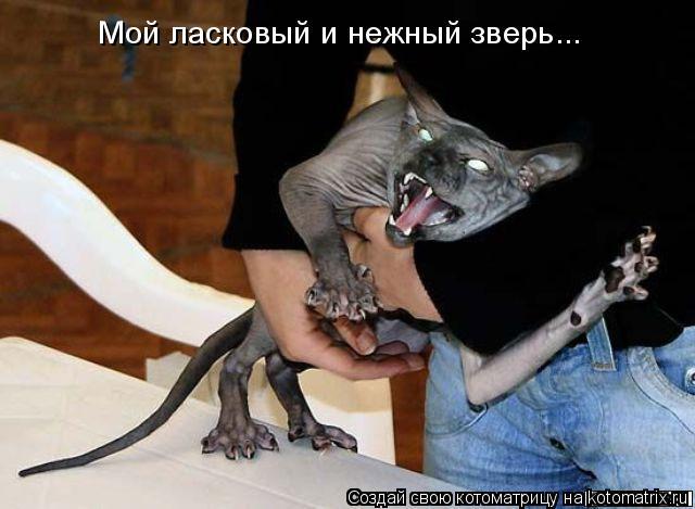 Котоматрица: Мой ласковый и нежный зверь...