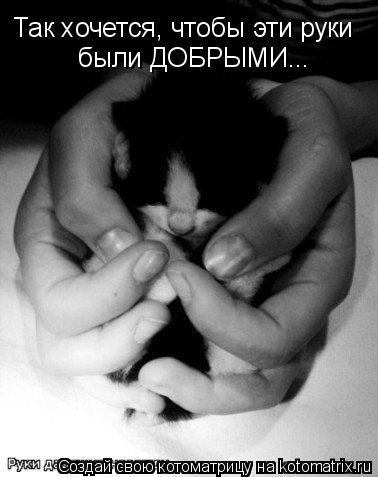 Котоматрица: Так хочется, чтобы эти руки были ДОБРЫМИ...