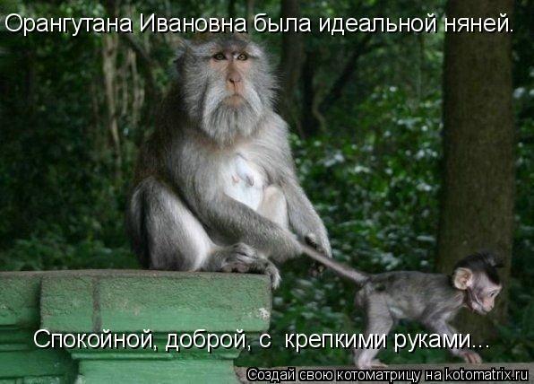 Котоматрица: Орангутана Ивановна была идеальной няней. Спокойной, доброй, с  крепкими руками...