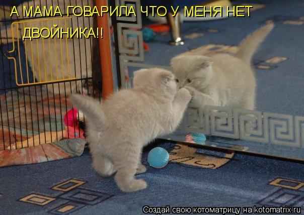 Котоматрица: А МАМА ГОВАРИЛА ЧТО У МЕНЯ НЕТ ДВОЙНИКА!!