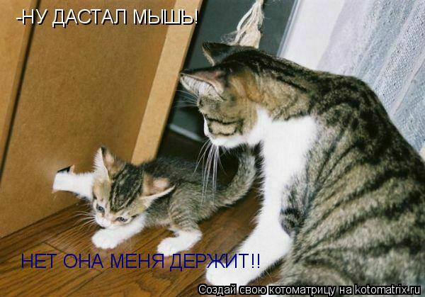 Котоматрица: -НУ ДАСТАЛ МЫШЬ! НЕТ ОНА МЕНЯ ДЕРЖИТ!!