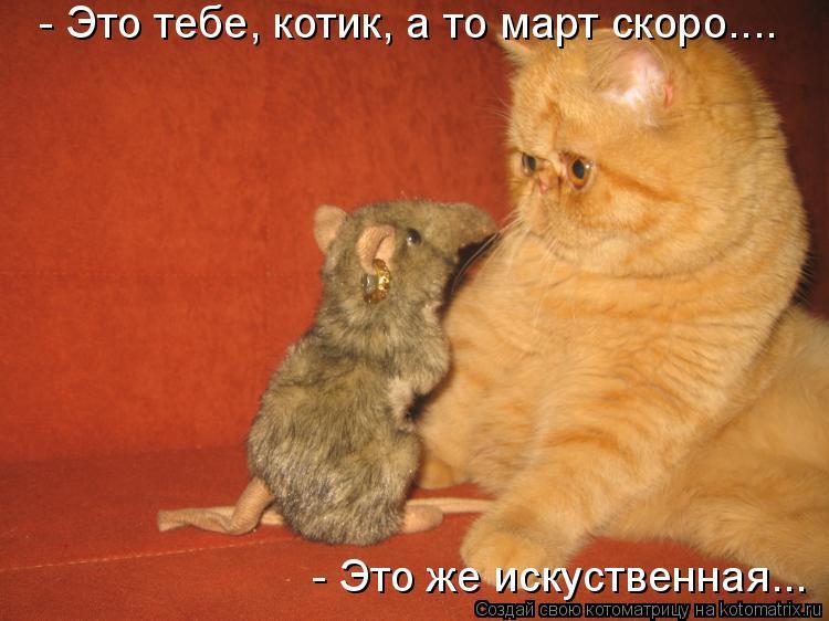 Котоматрица: - Это тебе, котик, а то март скоро.... - Это же искуственная...