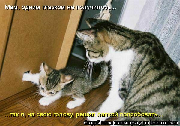 Котоматрица: Мам, одним глазком не получилось... ...так я, на свою голову, решил лапкой попробовать...