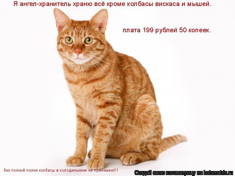 Котоматрица: Я ангел-хранитель храню всё кроме колбасы вискаса и мышей. плата 199 рублей 50 копеек. без полной полки колбасы в холодильнике не принимаю!!!