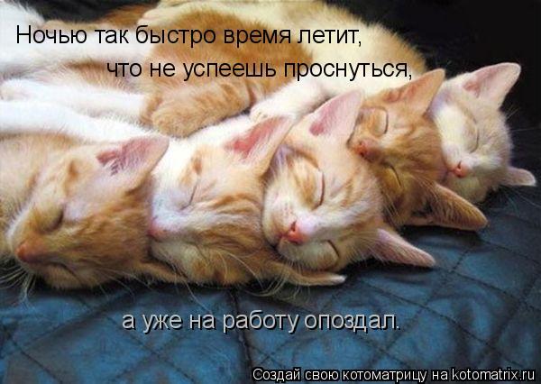 Котоматрица: Ночью так быстро время летит, что не успеешь проснуться, а уже на работу опоздал.