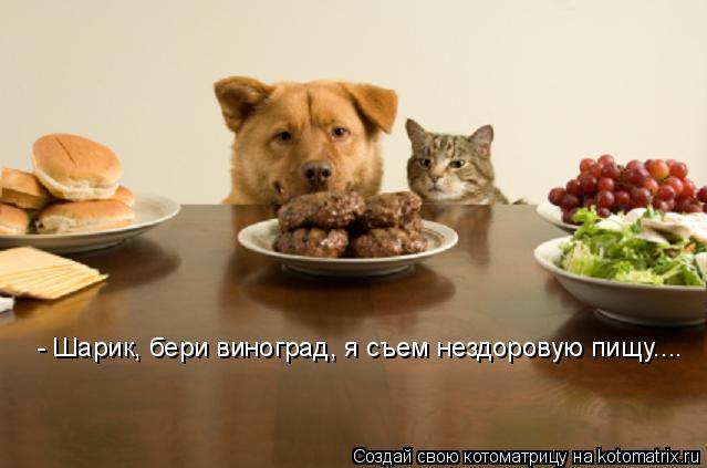 Котоматрица: - Шарик, бери виноград, я съем нездоровую пищу....