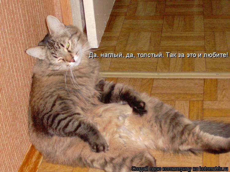 Котоматрица: Да. наглый, да, толстый. Так за это и любите!