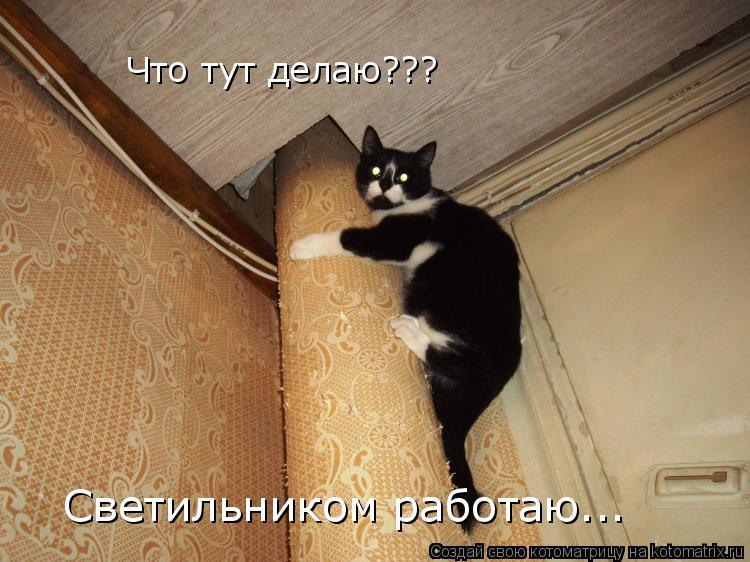 Котоматрица: Что тут делаю??? Светильником работаю...