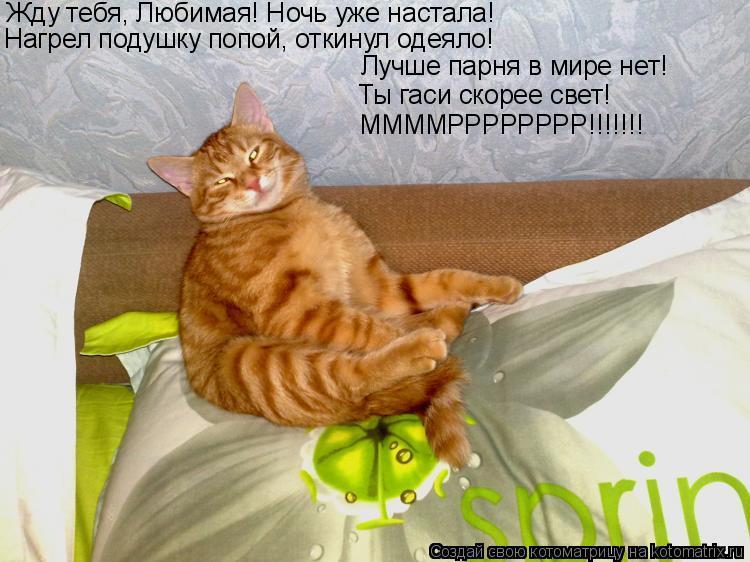 Котоматрица: Жду тебя, Любимая! Ночь уже настала! Нагрел подушку попой, откинул одеяло! Лучше парня в мире нет! Ты гаси скорее свет! ММММРРРРРРРР!!!!!!!