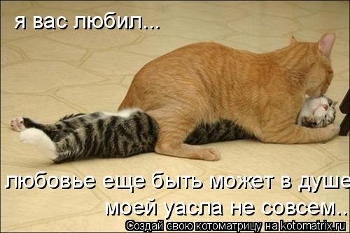 Котоматрица: я вас любил... любовье еще быть может в душе моей уасла не совсем...
