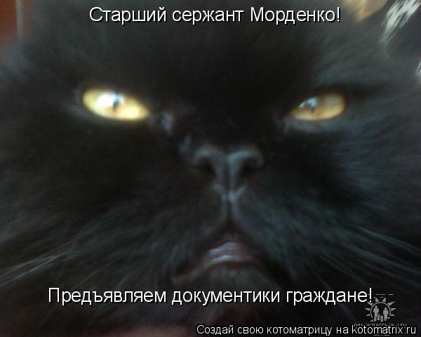 Котоматрица: Предъявляем документики граждане! Старший сержант Морденко!