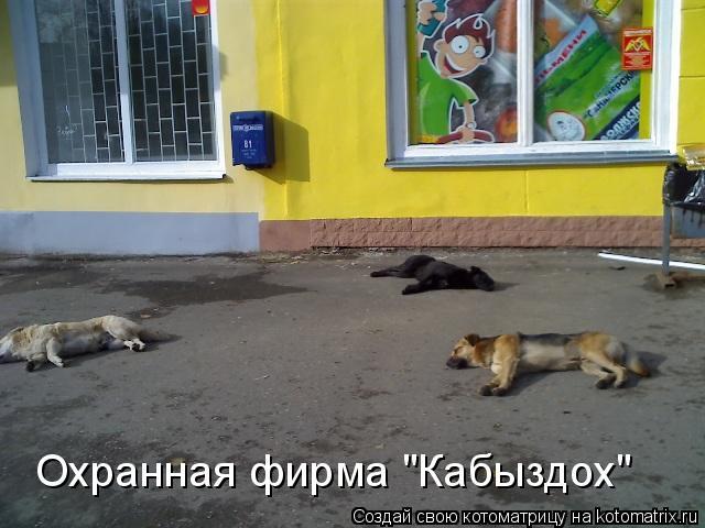 """Котоматрица: Охранная фирма """"Кабыздох"""""""