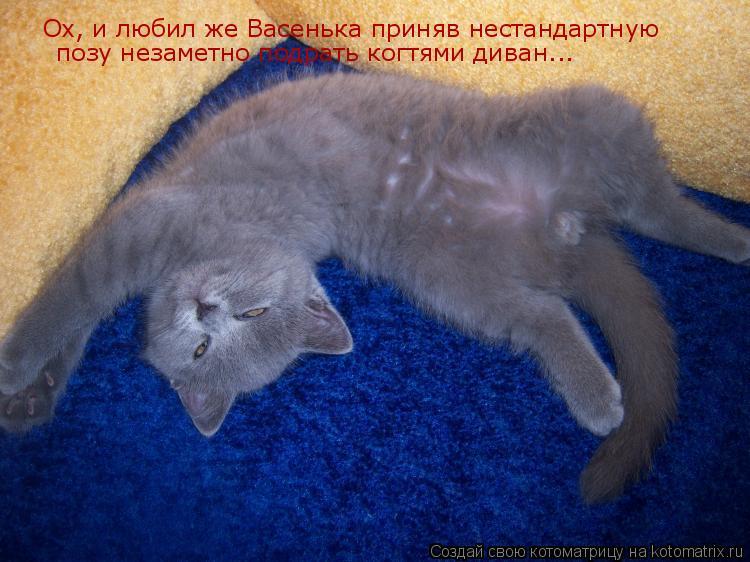 Котоматрица: Ох, и любил же Васенька приняв нестандартную позу незаметно подрать когтями диван...