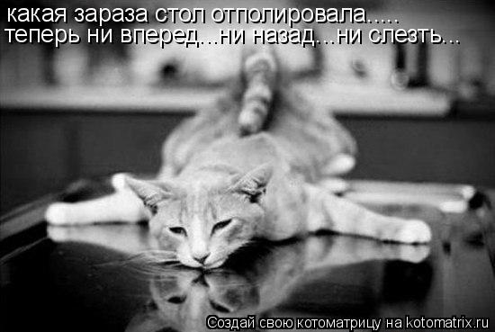 Котоматрица: какая зараза стол отполировала..... теперь ни вперед...ни назад...ни слезть...