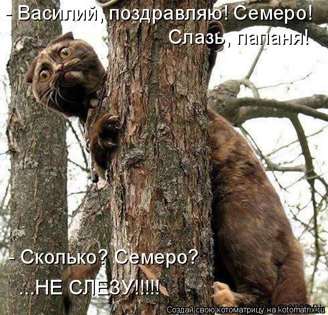 Котоматрица: - Василий, поздравляю! Семеро! Слазь, папаня! - Сколько? Семеро? ...НЕ СЛЕЗУ!!!!!
