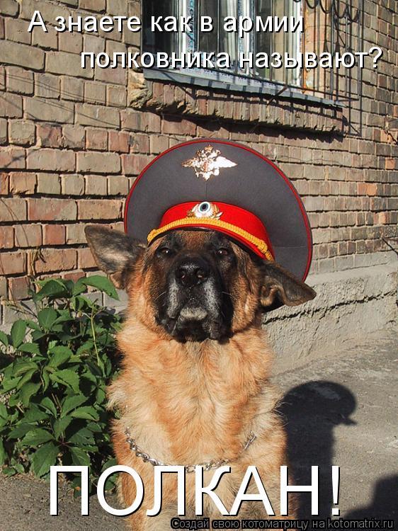 Котоматрица: А знаете как в армии полковника называют? ПОЛКАН!