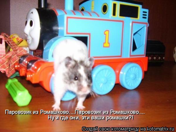Котоматрица: Паровозик из Ромашково....Паровозик из Ромашково.... Ну и где они, эти ваши ромашки?!