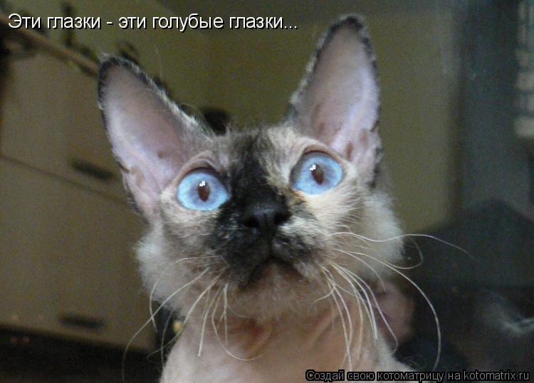 Котоматрица: Эти глазки - эти голубые глазки...