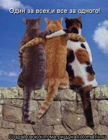Котоматрица: Один за всех,и все за одного!