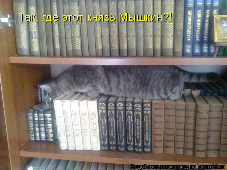 Котоматрица: Так, где этот князь Мышкин?!