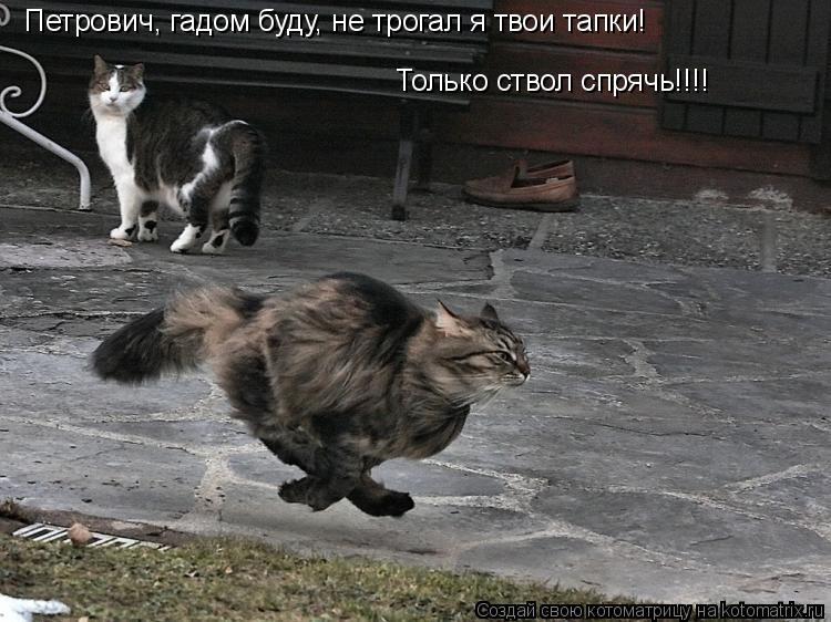 Котоматрица: Петрович, гадом буду, не трогал я твои тапки!  Только ствол спрячь!!!!