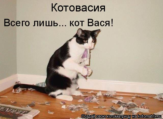 Котоматрица: Котовасия Всего лишь... кот Вася!
