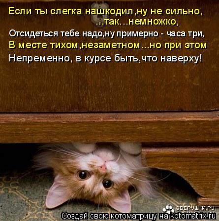 Котоматрица: Если ты слегка нашкодил,ну не сильно, ...так...немножко, Отсидеться тебе надо,ну примерно - часа три, В месте тихом,незаметном...но при этом Непр