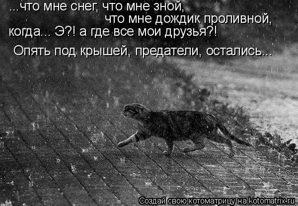 Котоматрица: ...что мне снег, что мне зной, что мне дождик проливной, когда... Э?! а где все мои друзья?!  Опять под крышей, предатели, остались...