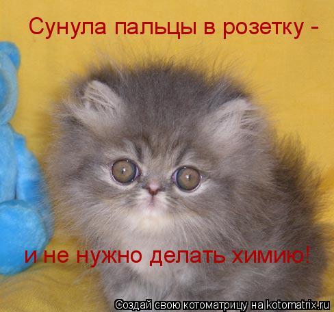 Котоматрица: Сунула пальцы в розетку -  и не нужно делать химию!