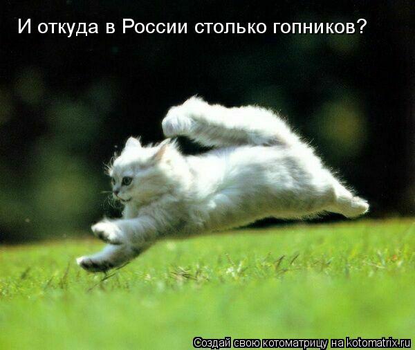 Котоматрица: И откуда в России столько гопников?