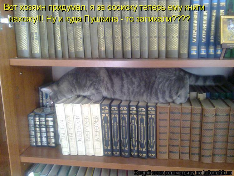 Котоматрица: Вот хозяин придумал, я за сосиску теперь ему книги нахожу!!! Ну и куда Пушкина - то запихали????